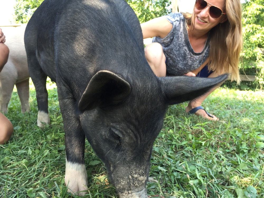 At Farm Sanctuary, animals like Anna are  treated as members of the family , not things to use.