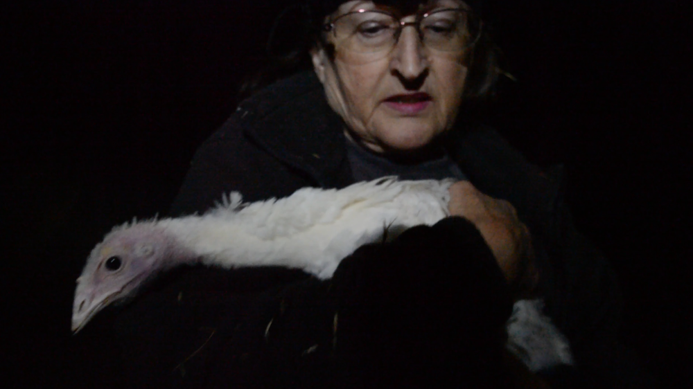 Rescuer Diane Sorbi with Helen, a hen  rescued from Diestel Turkey Ranch .