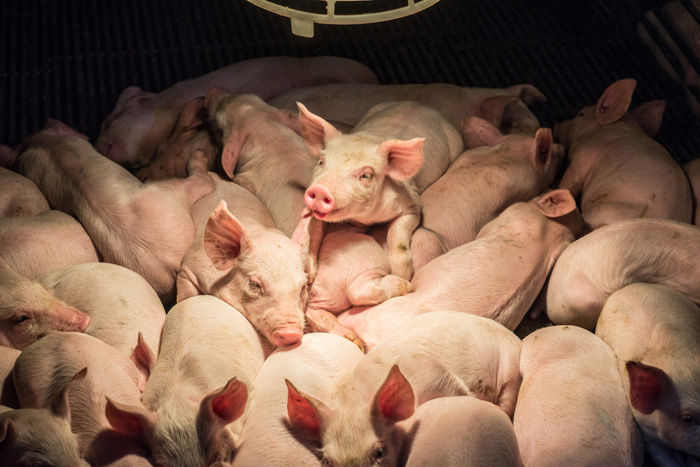 Five reasons why a moratorium is the right next step in our fight to #CancelAnimalAg