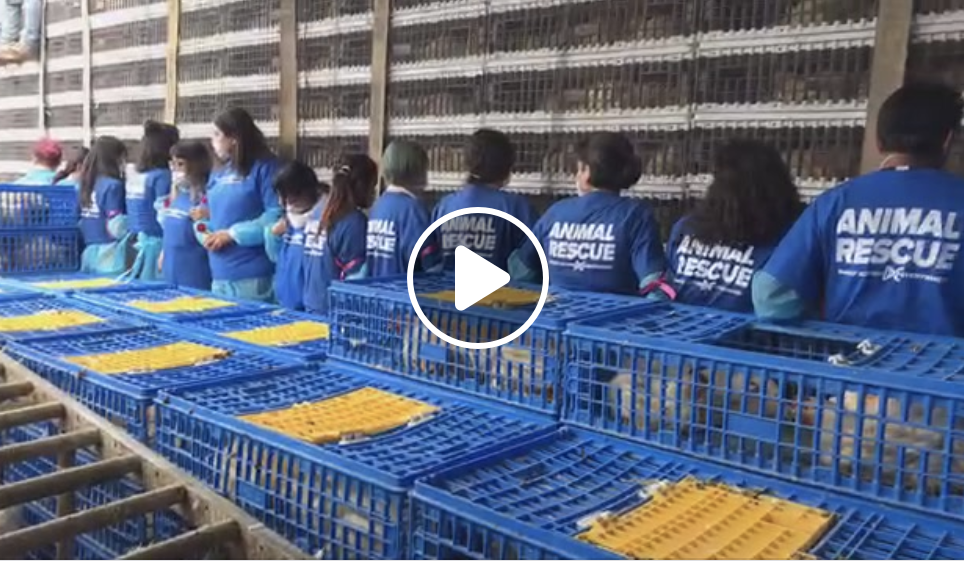 Slaughterhouse Occupation in Mexico City