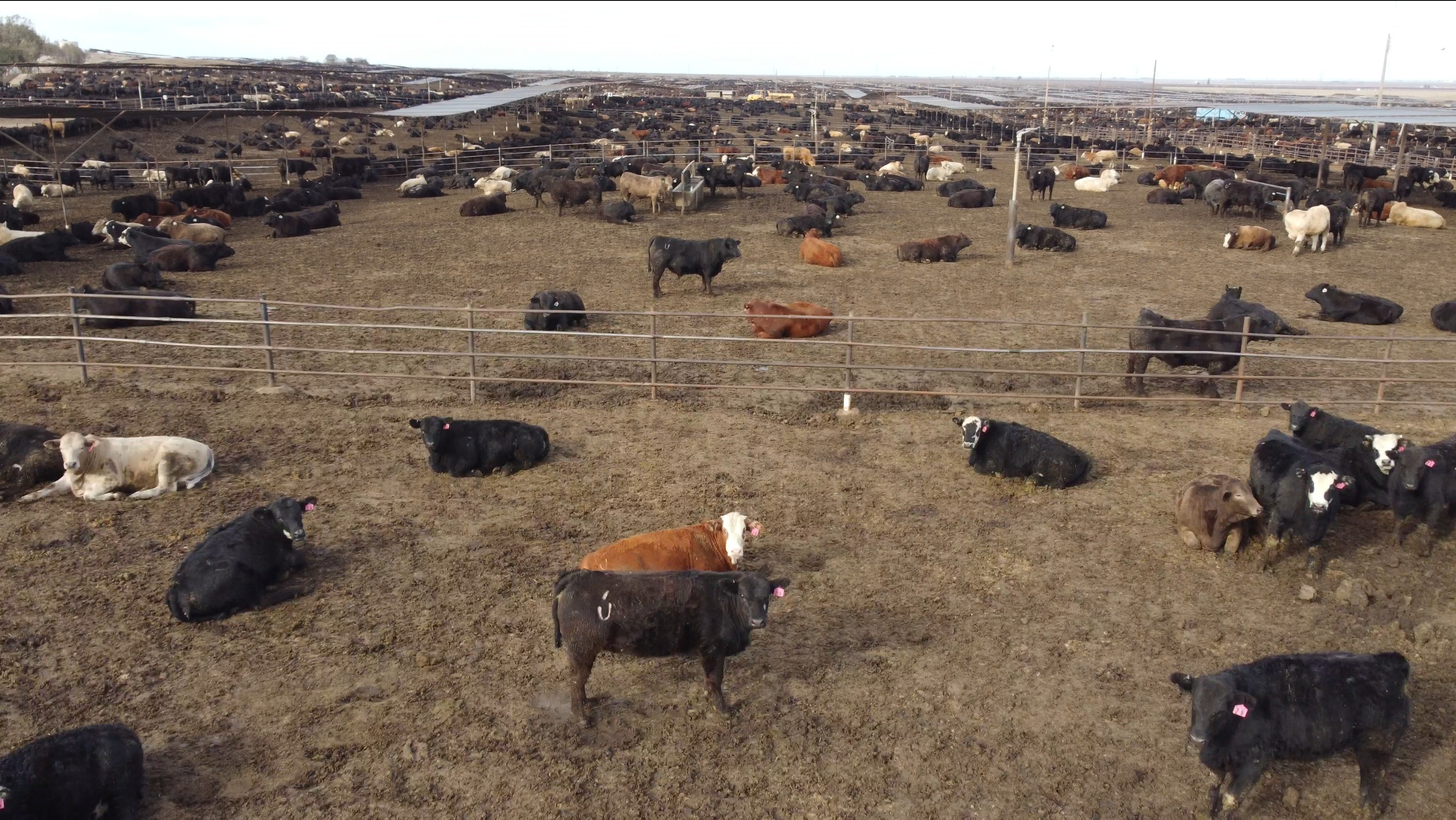 Why we urgently need a moratorium on animal agriculture expansion
