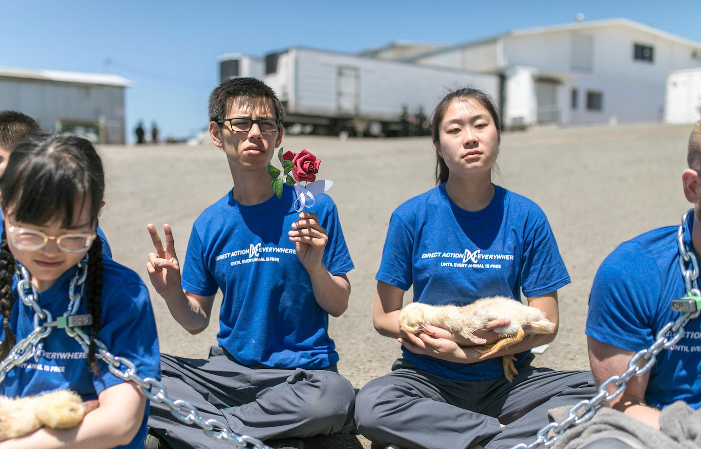Activists chained to the gates of a duck farm holding flowers