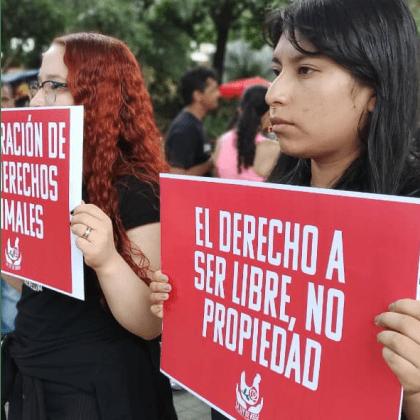 Protesta en Mexico