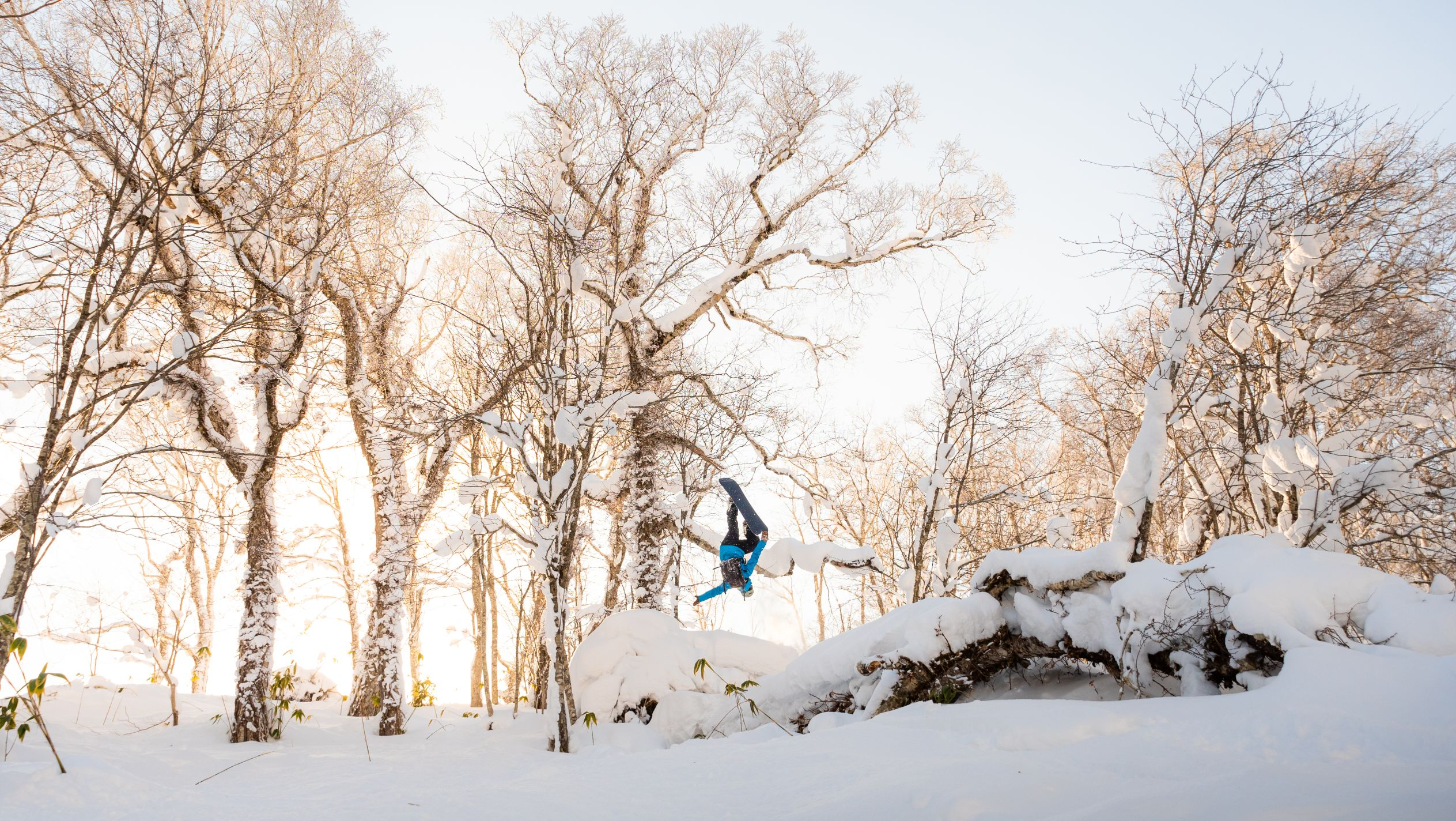 Snowboarder backflipping through trees in snowy setting.