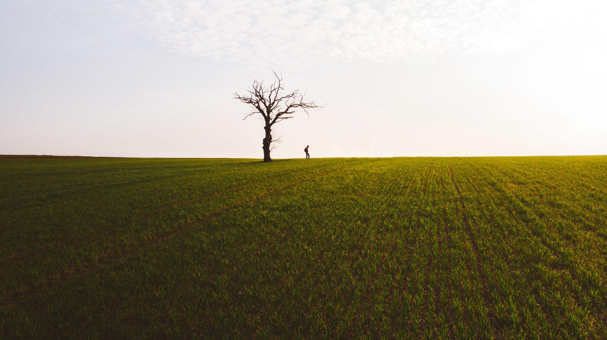 Single tree in a grassy field.