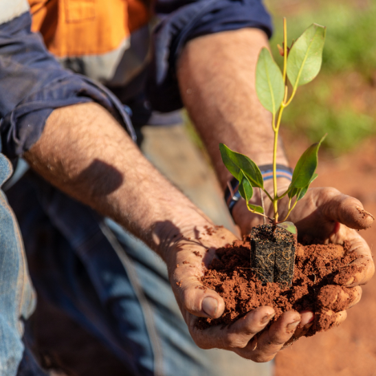 Why we plant trees & fund offset projects