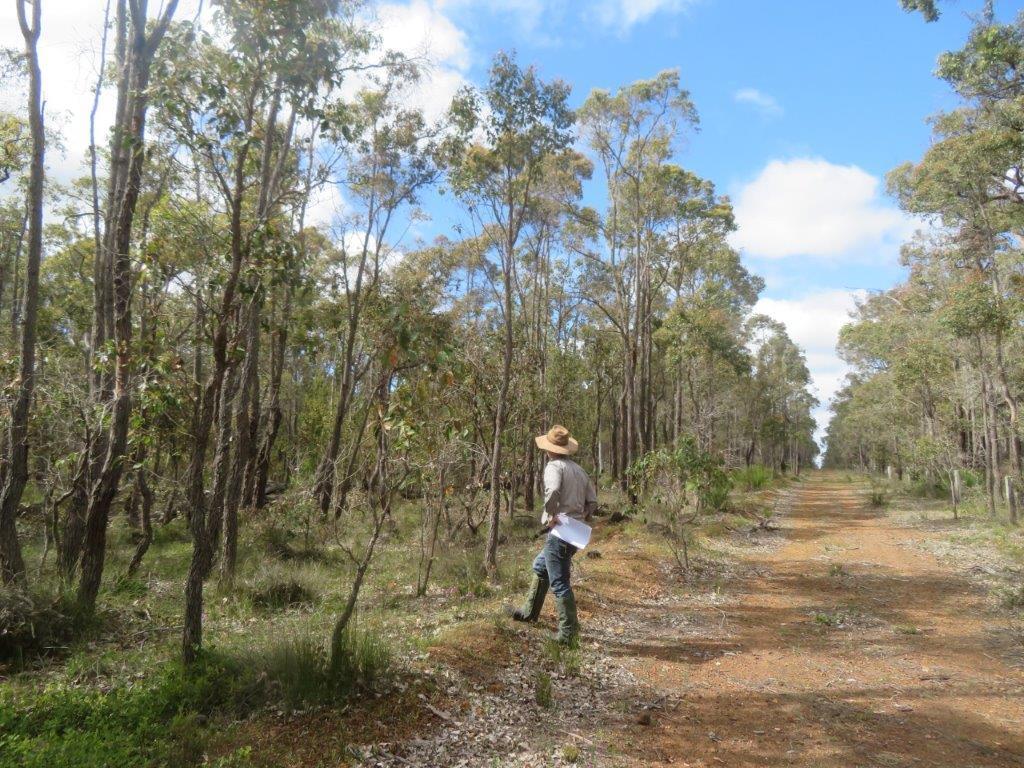 Tree planting, Australia