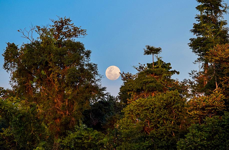 Moonrise over the Kinabatangan riverbanks