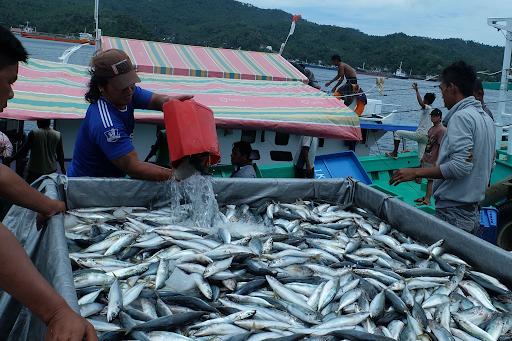 Fish Trade