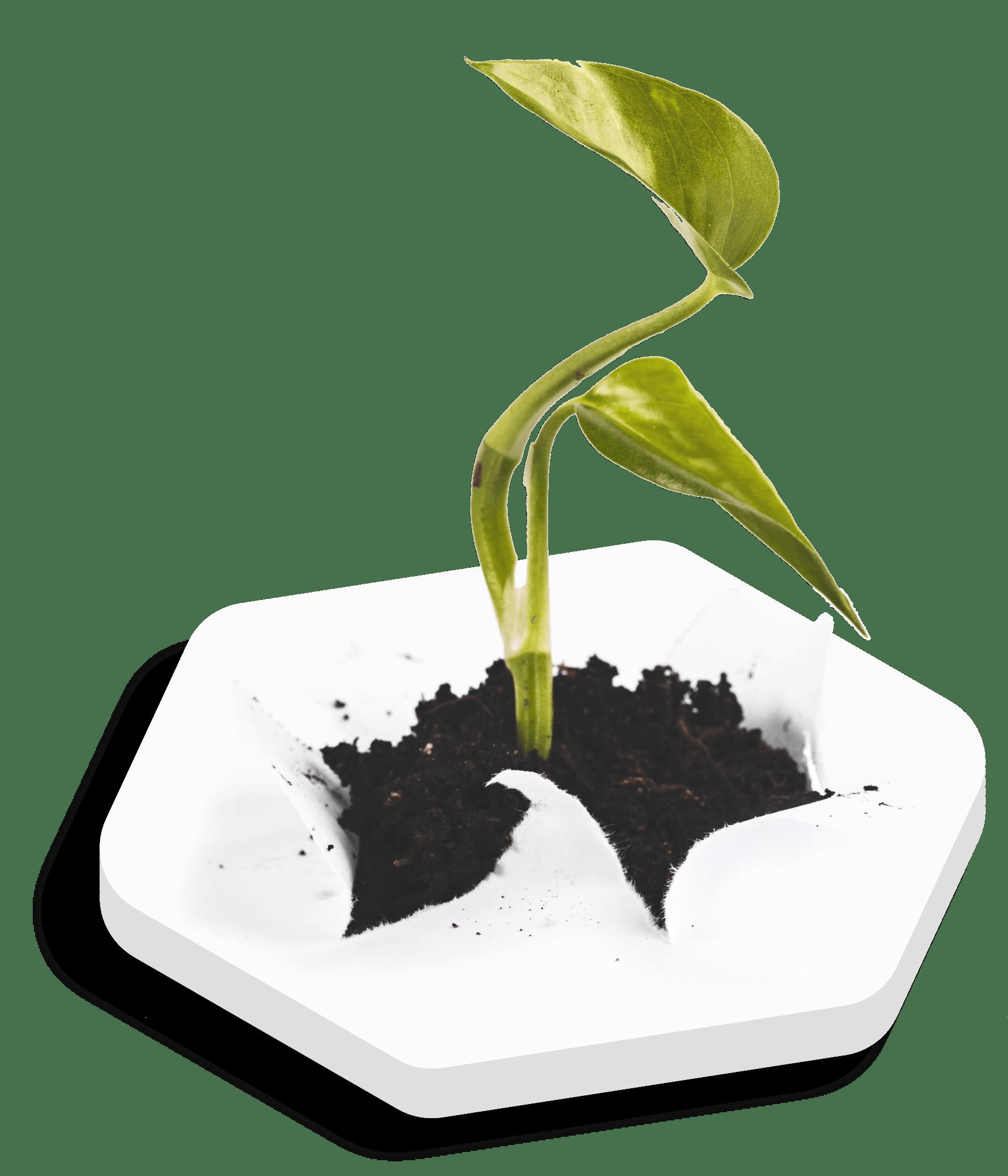 Pflanze im Wachstum