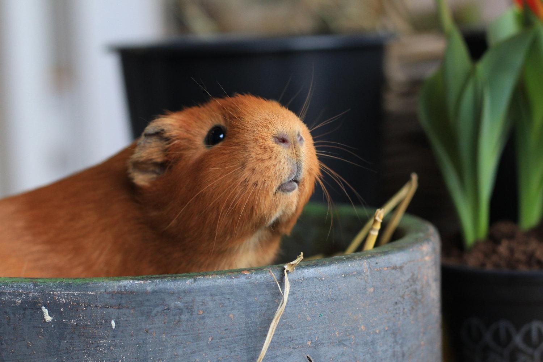 Im Hamsterrad immer gleicher Probleme gefangen?