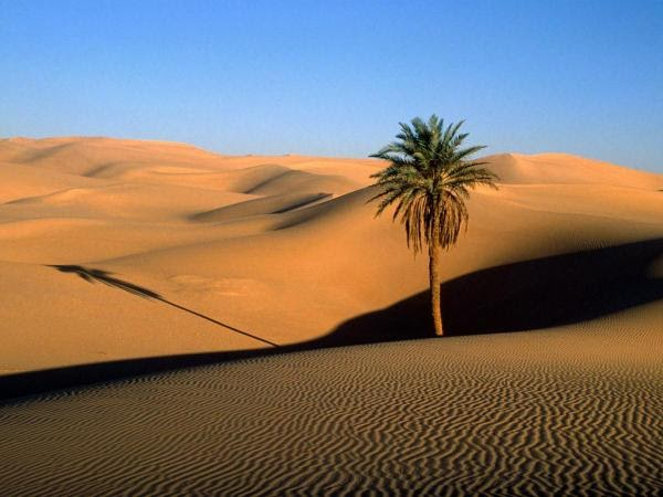 the Sahara desert and a single palm tree