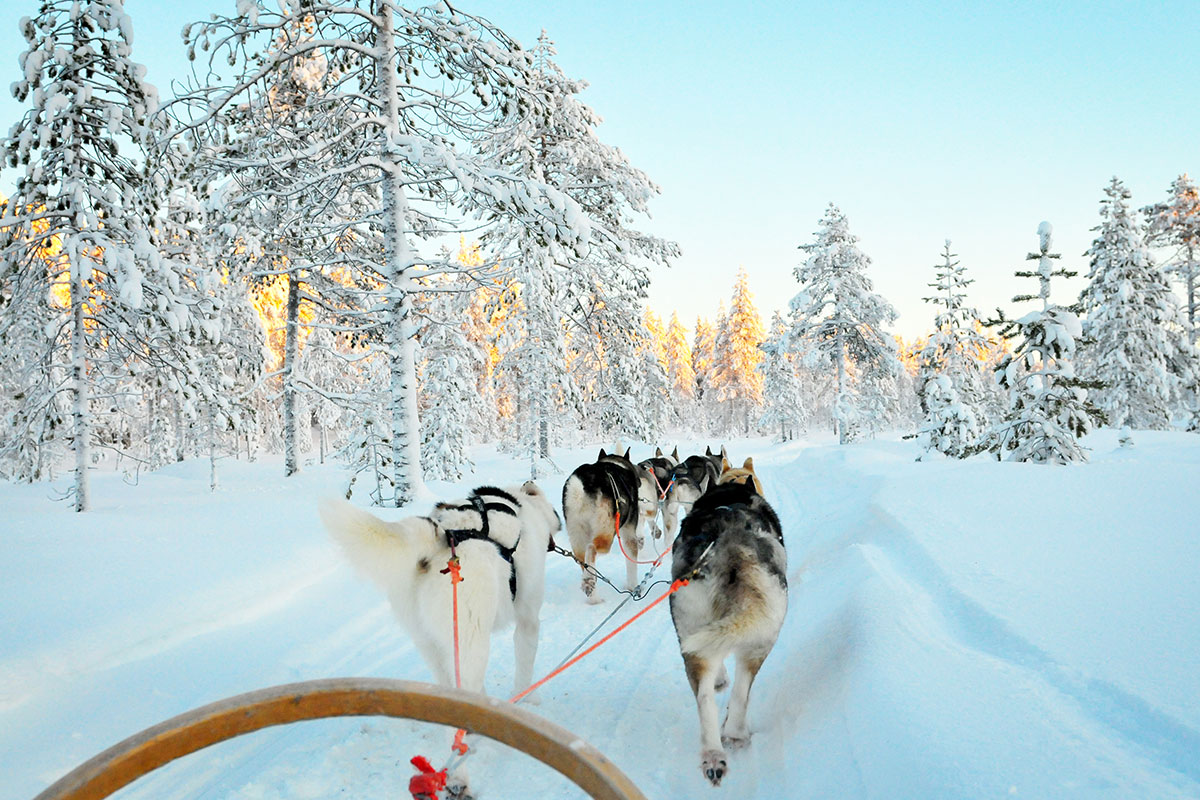 Northern Lights,  Ice Hotels and Huskies