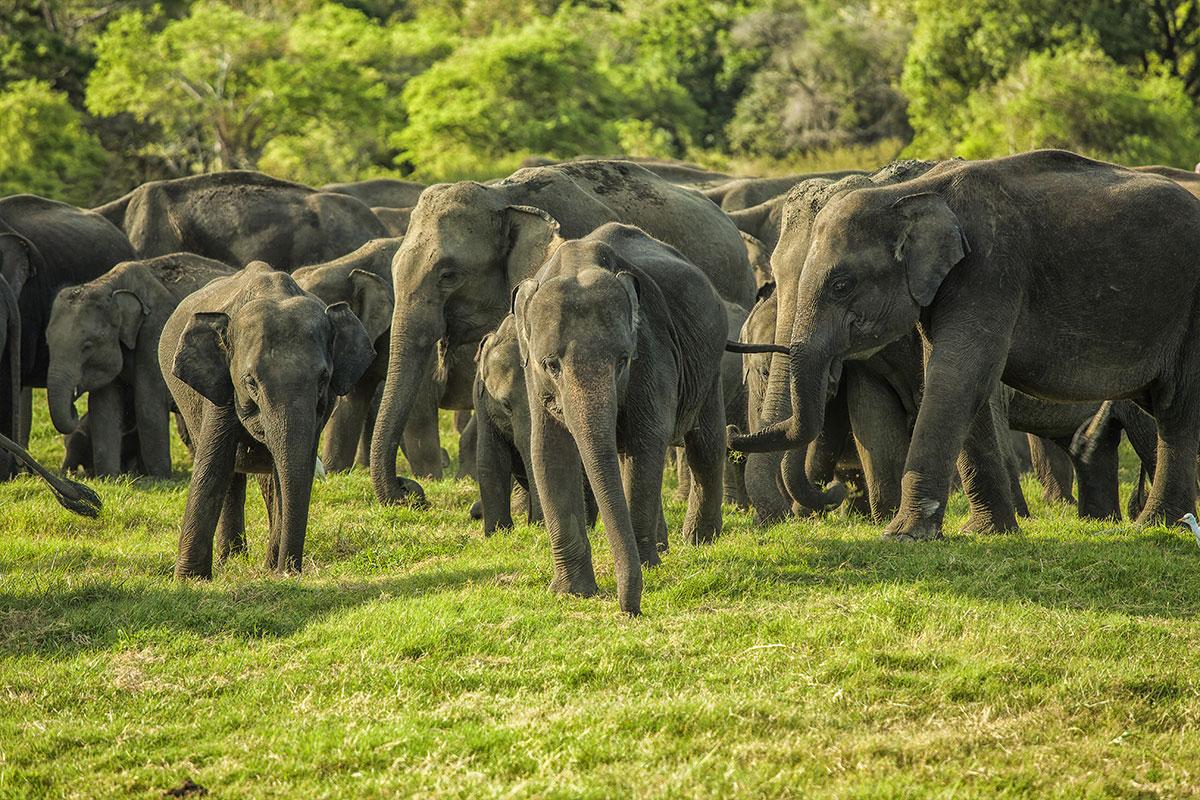 Northern Sri Lanka Highlights