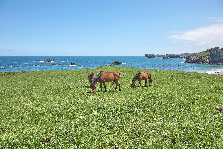 Caballos junto a la playa de Toranda en Llanes, Asturias