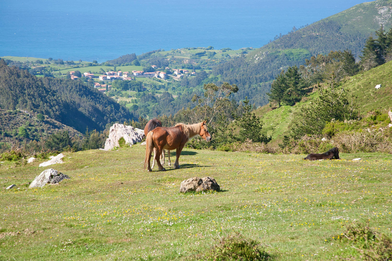 Caballos pastando en una pradera verde de la Sierra del Sueve con el Mar Cantabrico de fondo