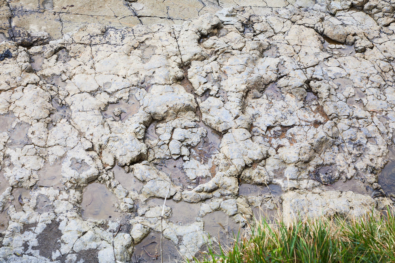 Grandes huellas de dinosaurio saurópodo del yacimiento de icnitas de la Playa de La Griega, Colunga, Asturias