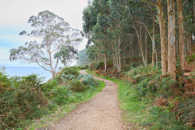 5 Camino hacia el yacimiento de icnitas con huellas de dinosaurio en la Playa de La Griega, Colunga, Asturias