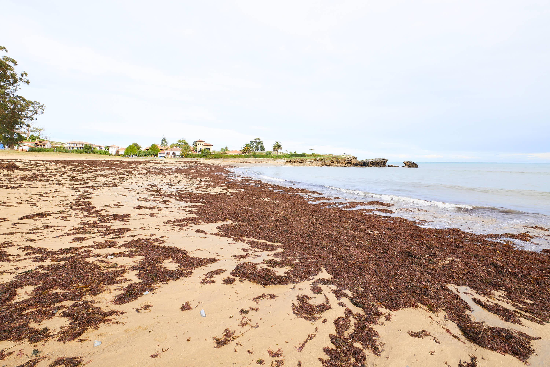 Algas en la Playa de La Isla, Colunga, Asturias