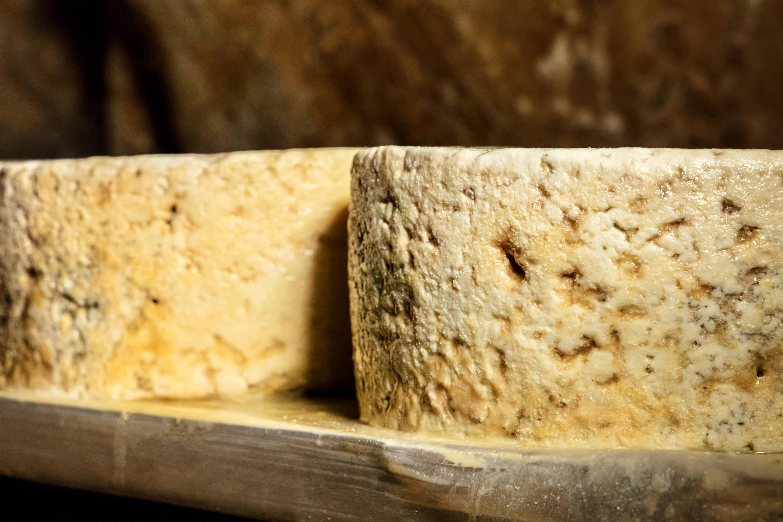 Detalle de grandes quesos madurando en estante de madera