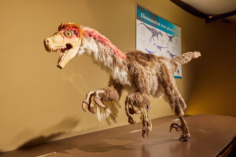 Dinosaurio Dromaeosaurus atacando en el Museo del Jurásico de Asturias, MUJA, Colunga