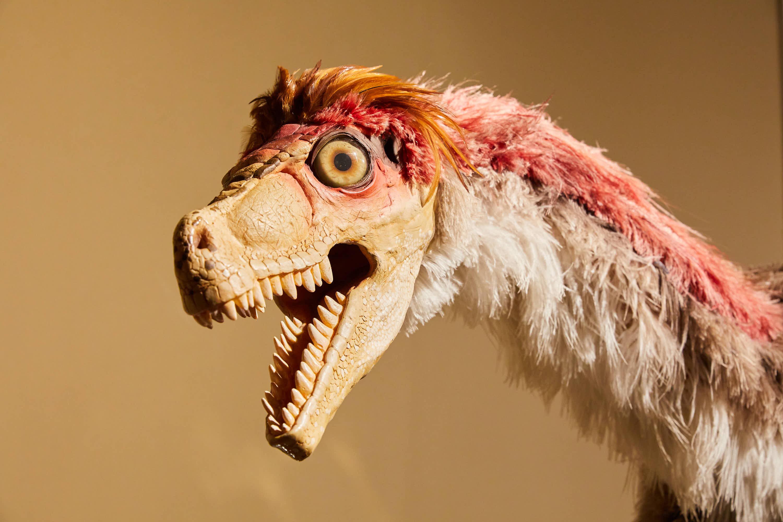 Cabeza de Dinosaurio Dromaeosaurus en el Museo del Jurásico de Asturias, MUJA, Colunga