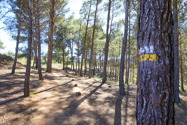 Señalización de la Ruta de las Caras, Buendía, Cuenca, Castilla La Mancha