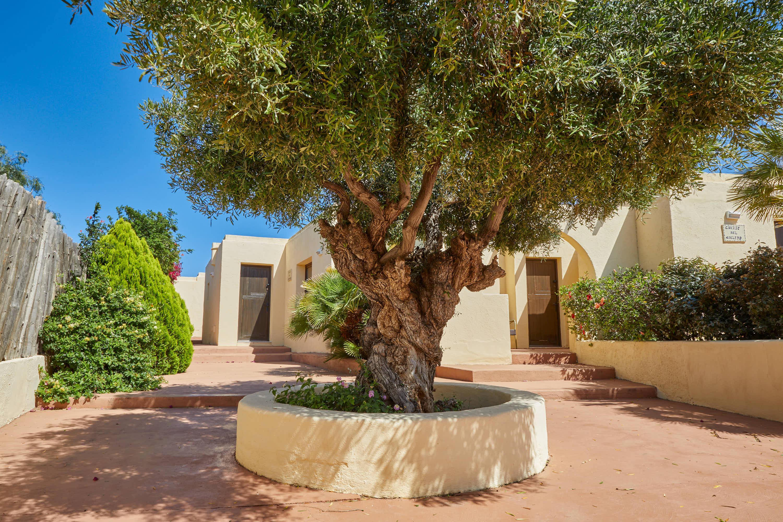 Arbol en el pasillo del Hotel Cortijo El Sotillo en SanJose, Cabo de Gata, Nijar, Almeria, Andalucia