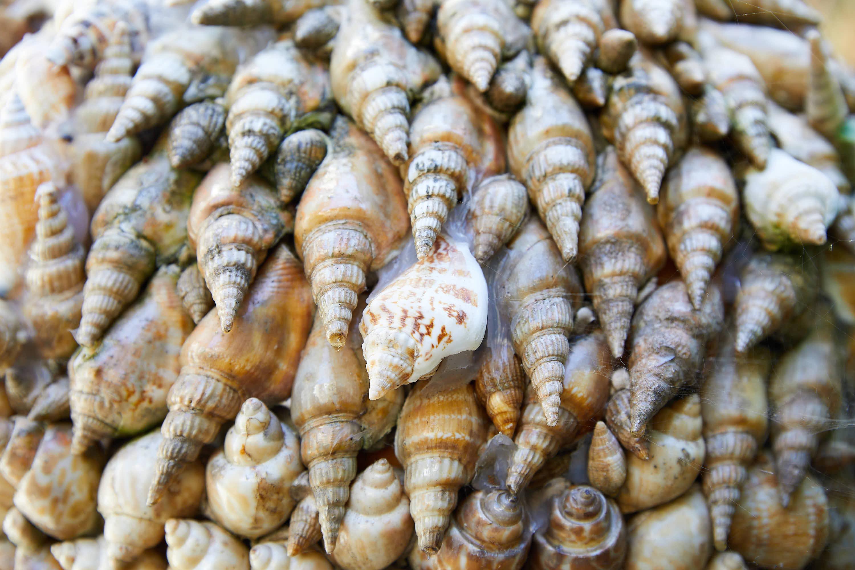 Detalle de caracolas en la Casa de las Conchas en Tazones, Villaviciosa, Asturias