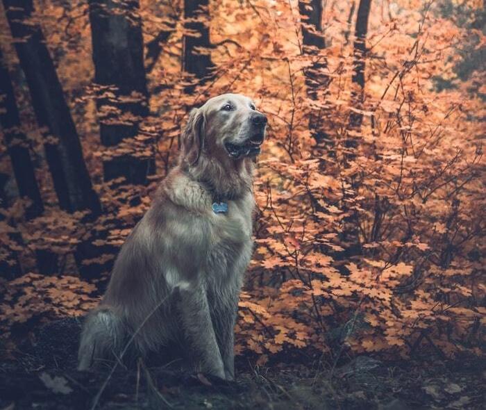Top 10 des idées pour un week-end insolite avec son chien
