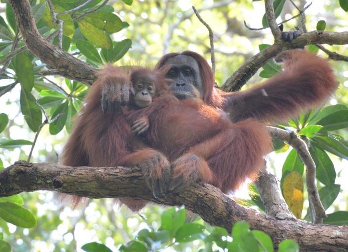 Lunch Break Science: Orangutan Cognition