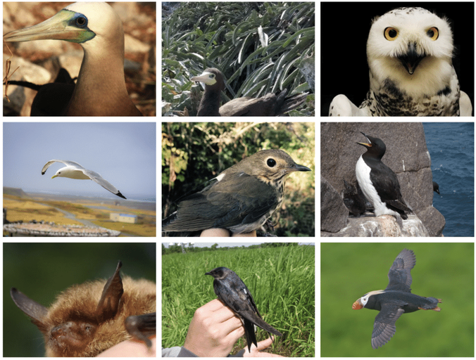 Interrogating Free-Ranging Birds Using Cutting-Edge Techniques