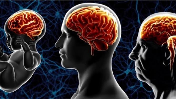 Aging and the Brain