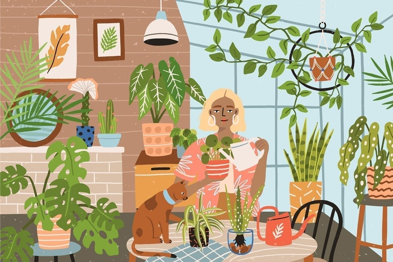 Indoor Plants: Care and Maintenance