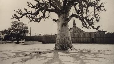 Curator's Choice: Trees!