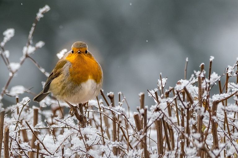 The 12 Days of Winter Wildlife