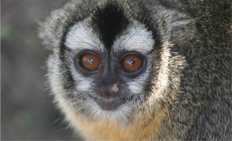 Lunch Break Science: Owl Monkeys with Eduardo Fernandez-Duque