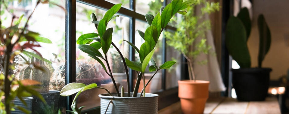 After Dark Online: House Plants