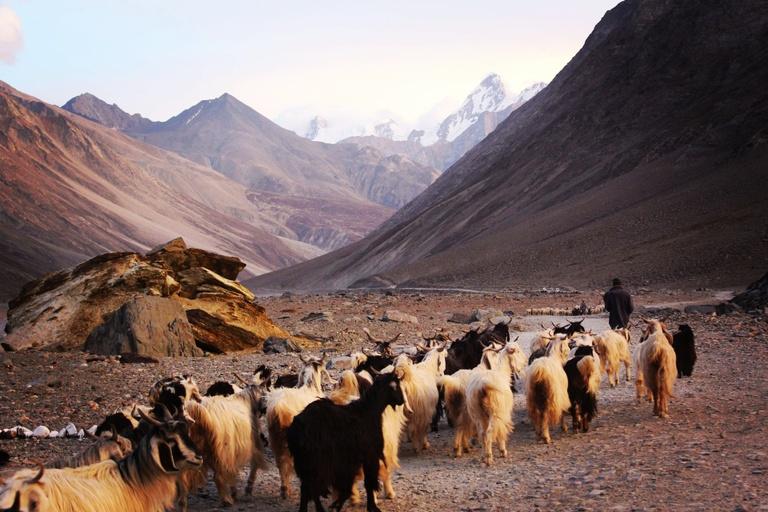 Xi Jinping's Himalayan Overreach