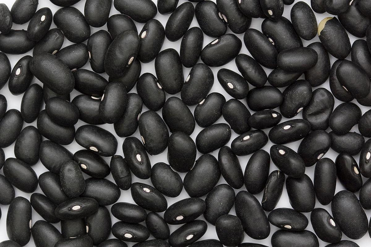 Bean Basics and Fig Follies