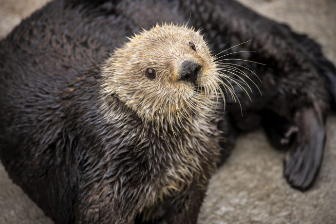 Virtual Sea Otter Experience