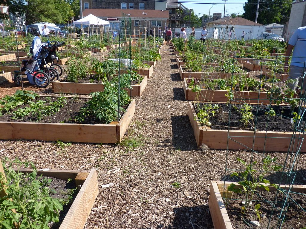 Urban Farming: Grow Your Own Food