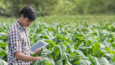 Digital Agriculture: New Frontiers for the Food System