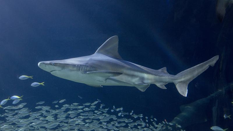 Virtual Shark Feeding Experience