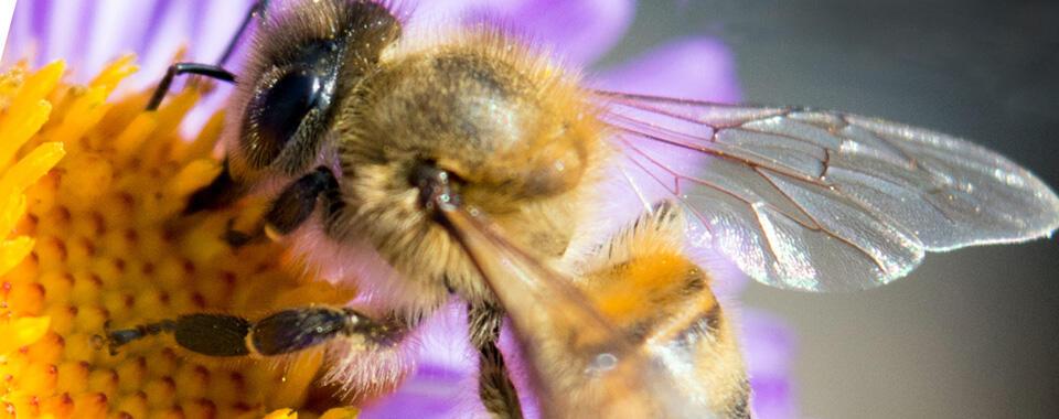 After Dark Online: Bees