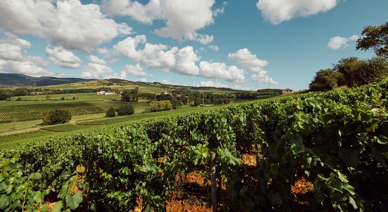 Big Macs & Burgundy: Unusual Pairings for Exceptional Wines