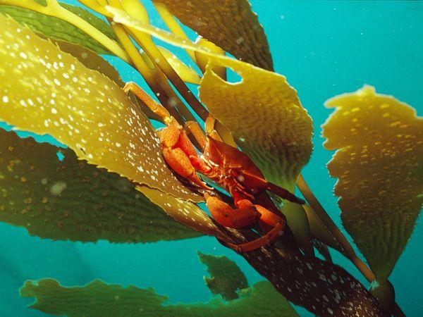 Curator's Choice: Seaweed, or Flowers of the Ocean