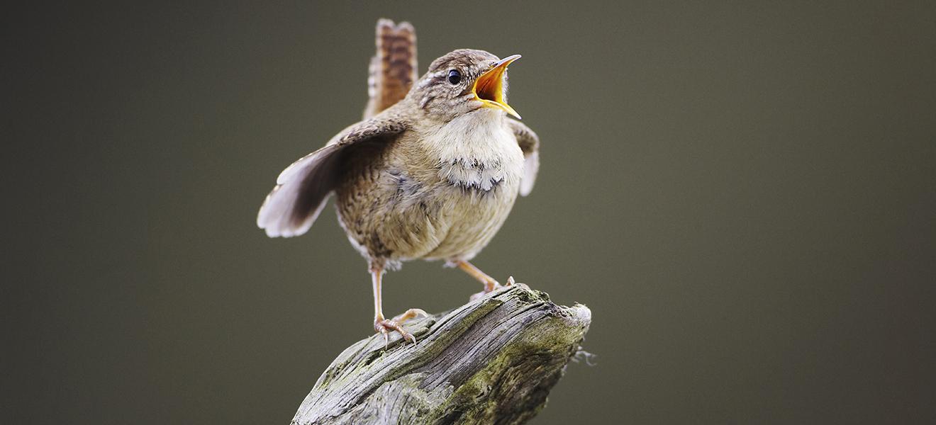 Drawn to Nature: Birds