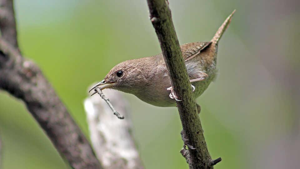 NightSchool: Songbirds in Spring