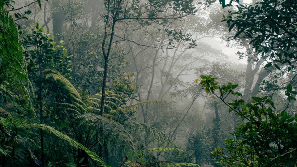 NightSchool: Rainforests